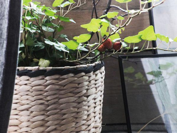 Rośliny we wnętrzach – w sypialni, w kuchni, na biurku.
