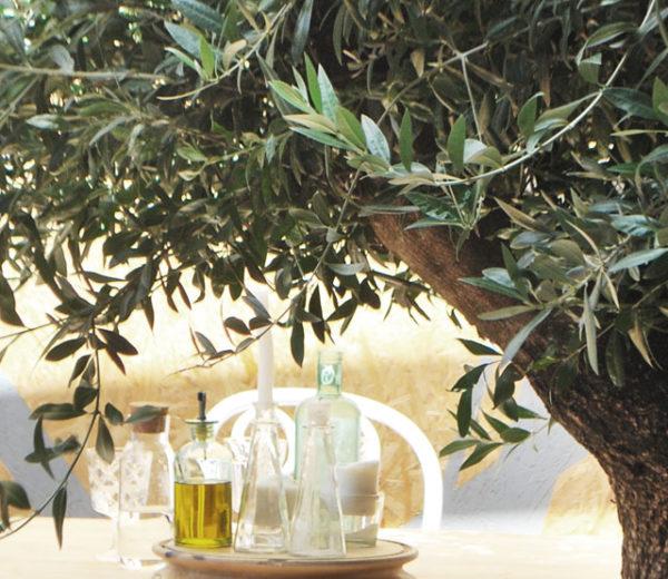Drzewko oliwne – spełnienie śródziemnomorskich marzeń.