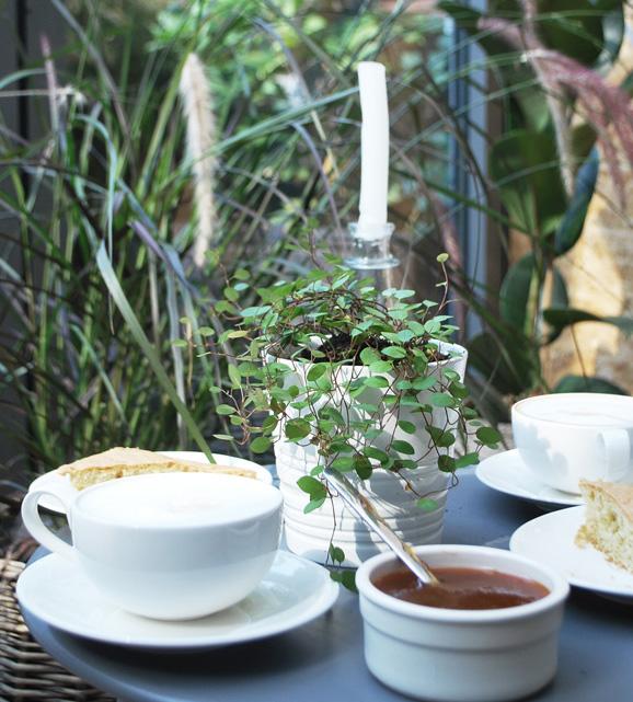 Urban jungle – na kawę z fikusem i paprotką.